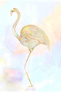 http://www.diguz.at/fotograf/files/gimgs/th-89_flamingo_kl_v2.jpg